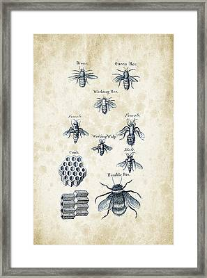 Insects - 1792 - 14 Framed Print by Aged Pixel
