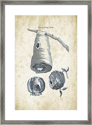Insects - 1792 - 15 Framed Print by Aged Pixel