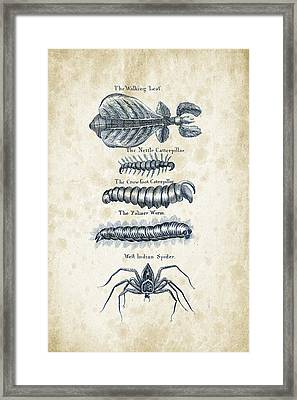 Insects - 1792 - 17 Framed Print by Aged Pixel