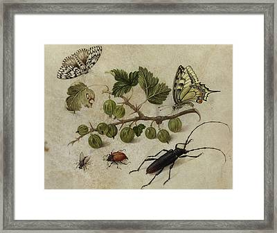 Insects And Butterfly Framed Print
