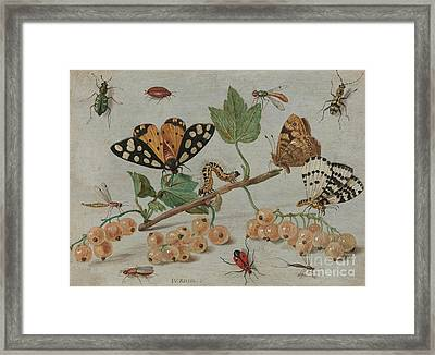 Insects And Fruit, Framed Print