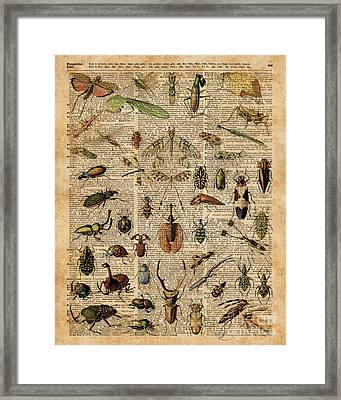Insects Bugs Flies Vintage Illustration Dictionary Art Framed Print by Jacob Kuch