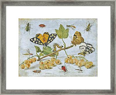 Insects Crawling Framed Print by ArtworkAssociates