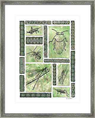 Insects Of Hawaii I Framed Print