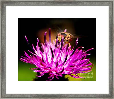 Insects Up Close Framed Print by Chris Smith