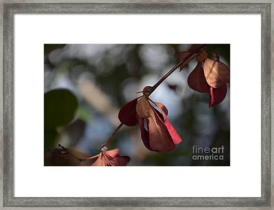 Inseparable  Framed Print