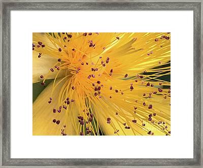 Inside A Flower - Favorite Of The Bees Framed Print