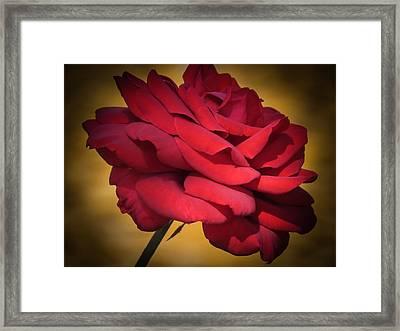 Inside A Rose Framed Print