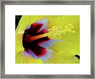 Inside A Yellow Beauty Framed Print