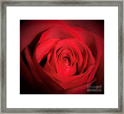Inside Of A Rose Framed Print