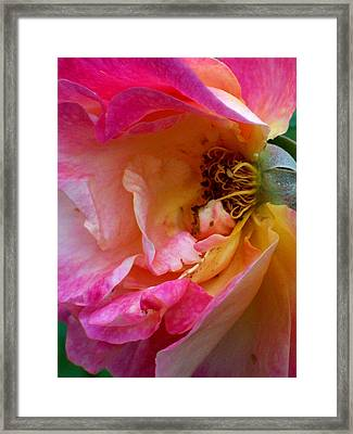 Inside Out Framed Print by Robin Jacobs