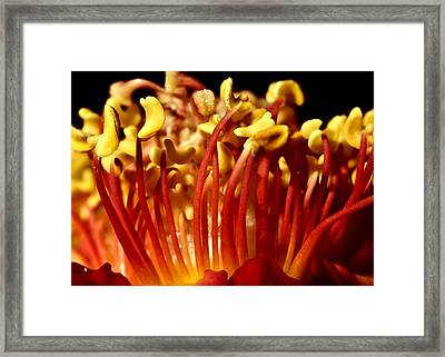 Inside Rose Framed Print by Svetlana Sewell