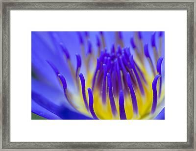 Inside The Blue Lotus Framed Print