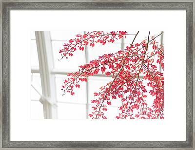 Framed Print featuring the photograph Inside The Greenhouse by Ana V Ramirez
