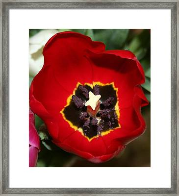 Inside The Red Framed Print by Magda Levin-Gutierrez