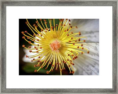 Inside The Rose Framed Print