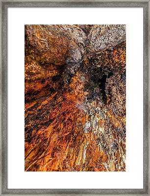 Insides Framed Print