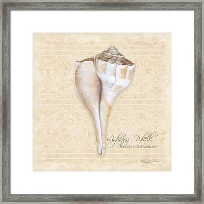 Inspired Coast 3 - Lightning Whelk Shell Busycon Contrarium Framed Print by Audrey Jeanne Roberts
