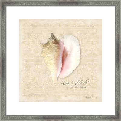 Inspired Coast I  - Queen Conch Shell Loratus Gigas Framed Print