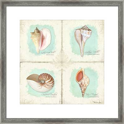 Inspired Coast Quartet - Seashells On Crackle Texture Board Framed Print by Audrey Jeanne Roberts