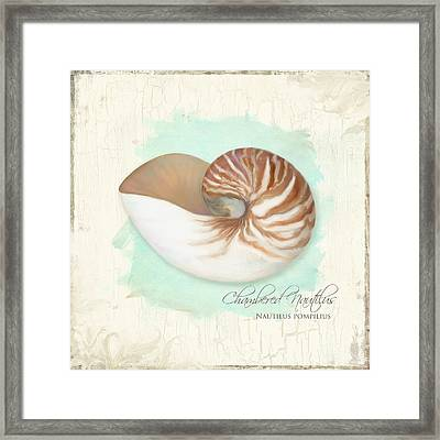 Inspired Coast V - Chambered Nautilus Shell On Board Framed Print by Audrey Jeanne Roberts