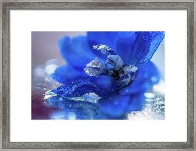 Intense Blue Framed Print by Jenny Rainbow