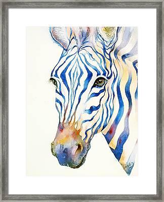 Intense Blue Zebra Framed Print by Arti Chauhan