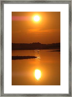 Intense Egret Framed Print by See Me Beautiful Photography