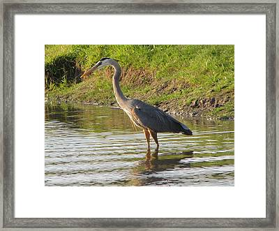 Intense Fishing Framed Print