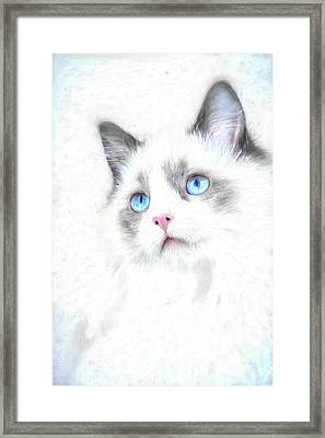 Intense Gaze Framed Print