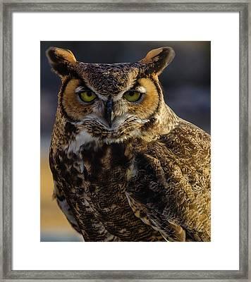 Intense Owl Framed Print