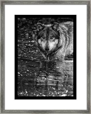 Framed Print featuring the photograph Intense Reflection by Shari Jardina