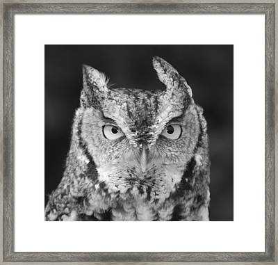 Framed Print featuring the photograph Intense Stare by Richard Bryce and Family