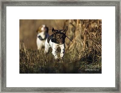 Intensity - D009789 Framed Print