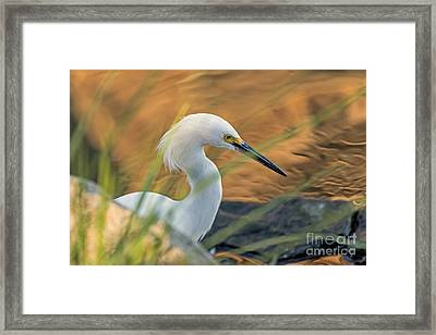 Intent Hunter Framed Print