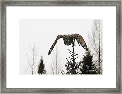 Framed Print featuring the photograph Intent On His Prey by Larry Ricker