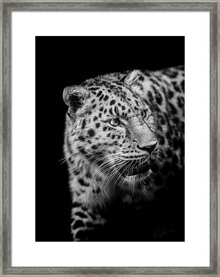 Intent Framed Print by Paul Neville