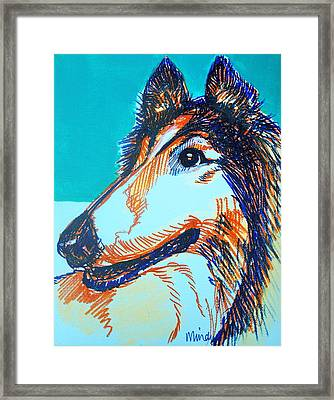 Interested Collie Framed Print by Melinda Page