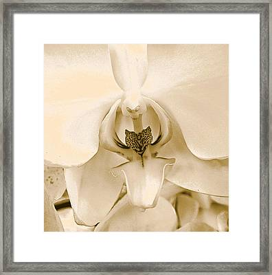 Interiors Framed Print by William Feig
