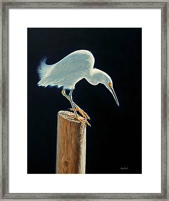 Interlude - Snowy Egret Framed Print