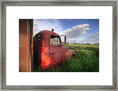 International In The Tall Grass Framed Print
