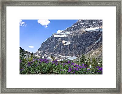 Interpretive Apps In The Canadian Rockies Framed Print