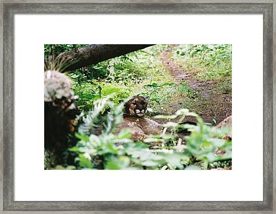 Interrupted Nap Framed Print