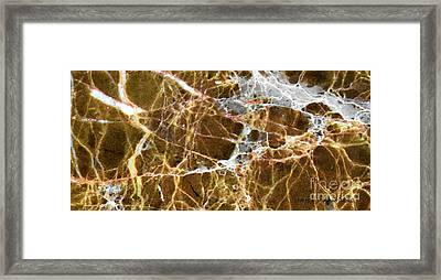 Interspace Web Framed Print
