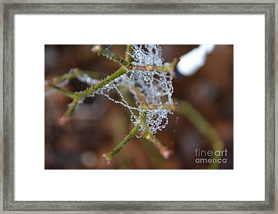 Intertwined In Beauty And Life. -georgia Framed Print