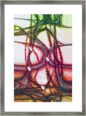 Intertwining Framed Print by Linda Sannuti