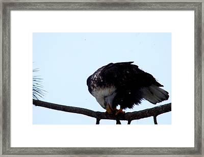 Intesnity Framed Print by Jeff Swan