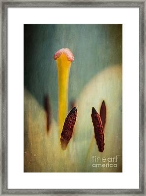 Intimate Details Framed Print