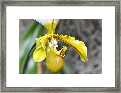 Intimate Orchid 5 - Sharon Cummings Framed Print by Sharon Cummings