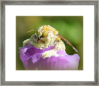 Into Something Good Framed Print